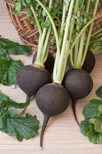 black-radish